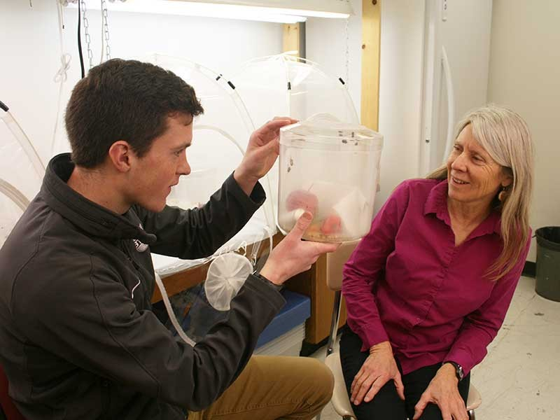 Raising a Stink: USU Undergrad Rears Invasive Crop Pests for Research | Biology